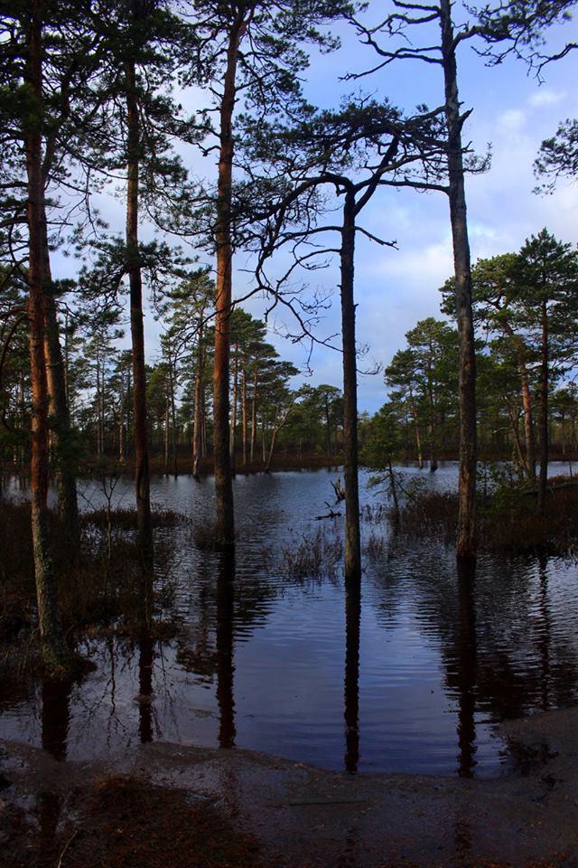 flood on the bog