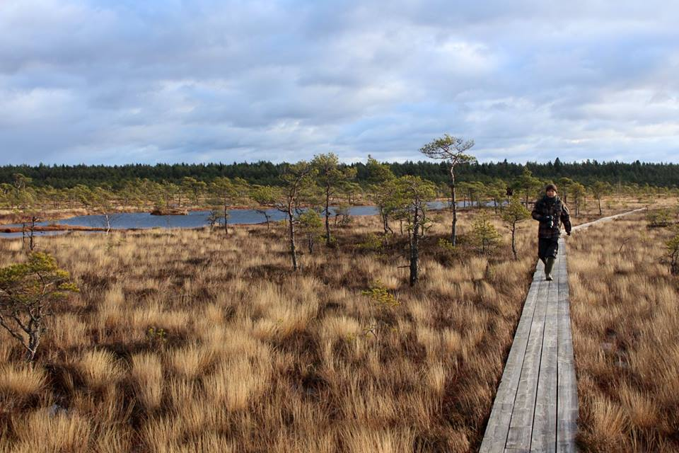 walking Hüpassaare bog trail
