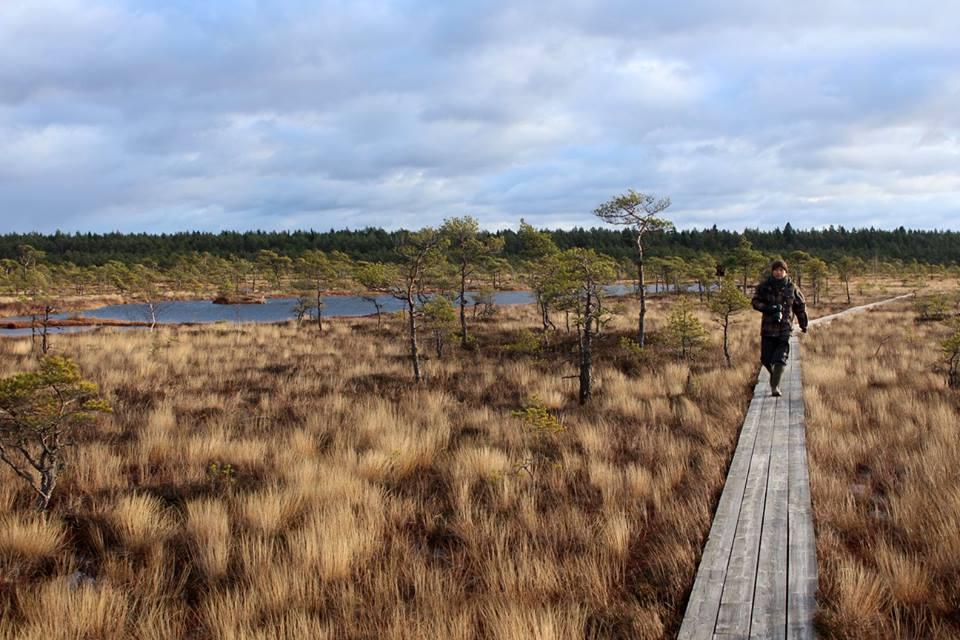 walking Hüpassaare bog trail
