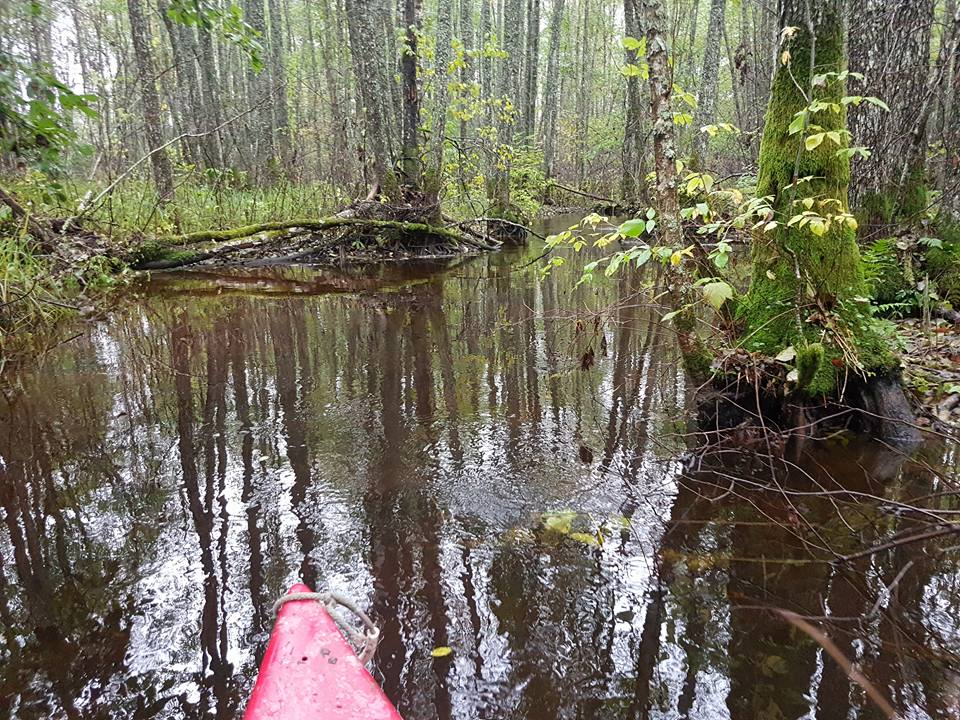 Canoe trips in flooded forests